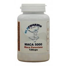 MACA 5000 120cps