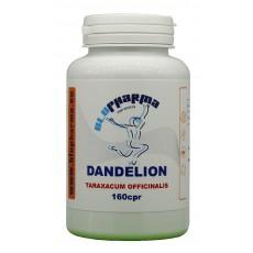 DANDELION 160cpr